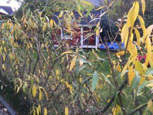 Das Laub fällt im November vom Weidenzaun ab