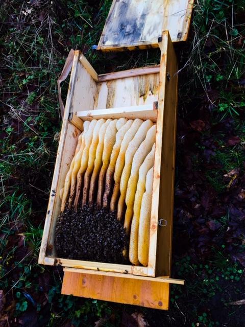Die Bienenkiste bei der Oxalsäurebehandlung im Winter