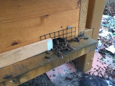 Tote Bienen im Januar