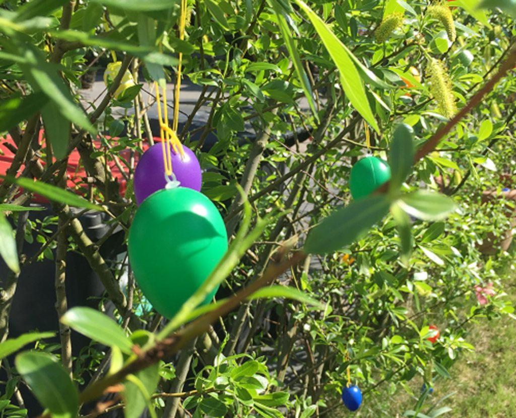 rohe Ostern vom lebenden Weidenzaun!